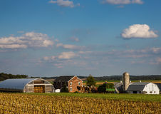 Agricoltori di Amish Immagini Stock Libere da Diritti