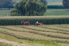 Agricoltori di Amish che effettuano il raccolto Fotografia Stock