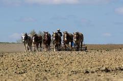 Agricoltori di Amish che lavorano la terra Fotografia Stock Libera da Diritti
