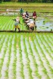 Agricoltori di Laddy Fotografia Stock