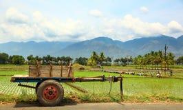 Agricoltori di Laddy Fotografie Stock