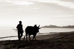 Agricoltori di latteria Fotografia Stock