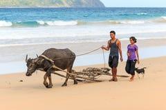 Agricoltori di Nacpan che camminano sulla spiaggia con un Carabao, il bufalo d'acqua Immagini Stock Libere da Diritti
