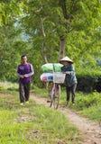 Agricoltori di tè asiatici che portano i pacchetti di tè dalla collina alla fabbrica del tè Fotografia Stock