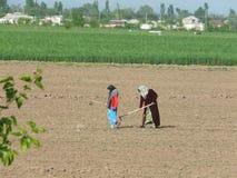 Agricoltori di tagico che lavorano nei campi Immagine Stock Libera da Diritti