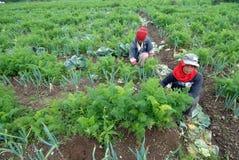 agricoltori di verdure Fotografia Stock