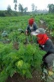 Agricoltori di verdure Immagini Stock