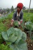 Agricoltori di verdure Immagine Stock