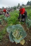 Agricoltori di verdure Fotografie Stock