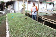 Agricoltori di verdure in Indonesia Fotografia Stock Libera da Diritti