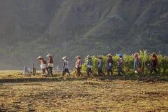 Agricoltori di Woman's Fotografia Stock Libera da Diritti