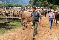 Agricoltori durante la mostra delle mucche a Engelberg Immagine Stock Libera da Diritti