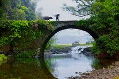Agricoltori e bestiame Fotografia Stock