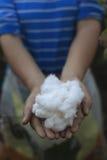 Agricoltori e cotone Fotografia Stock Libera da Diritti