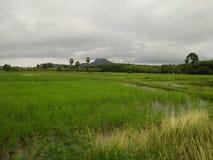 Agricoltori e riso e montagne dell'azienda agricola in Tailandia Fotografie Stock
