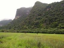 Agricoltori e riso e montagne dell'azienda agricola in Tailandia Immagine Stock