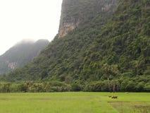 Agricoltori e riso e montagne dell'azienda agricola in Tailandia Fotografia Stock Libera da Diritti
