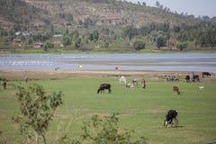 Agricoltori in Etiopia Fotografia Stock