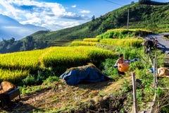 Agricoltori etnici non identificati che asciugano i semi su un'iarda al suolo sulla montagna Fotografia Stock