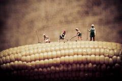 Agricoltori felici che raccolgono cereale Macro foto Immagini Stock Libere da Diritti