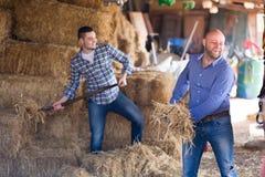 Agricoltori felici che tedding fieno Fotografia Stock Libera da Diritti