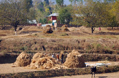 Agricoltori, Jammu, India Fotografia Stock