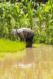 Agricoltori - l'agricoltura della Tailandia ha cominciato già nel campo Fotografia Stock Libera da Diritti