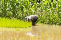 Agricoltori - l'agricoltura della Tailandia ha cominciato già nel campo Immagine Stock Libera da Diritti