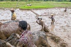 Agricoltori malgasci che arano campo agricolo Fotografia Stock Libera da Diritti