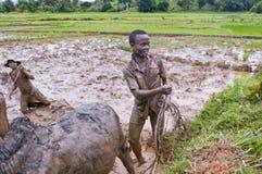 Agricoltori malgasci che arano campo agricolo Immagini Stock