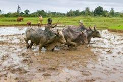 Agricoltori malgasci che arano campo agricolo Fotografie Stock Libere da Diritti