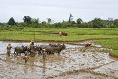 Agricoltori malgasci che arano campo agricolo nel modo tradizionale Immagini Stock Libere da Diritti