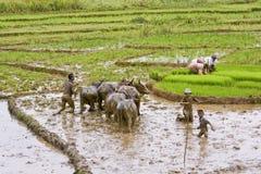 Agricoltori malgasci che arano campo agricolo nel modo tradizionale Immagini Stock