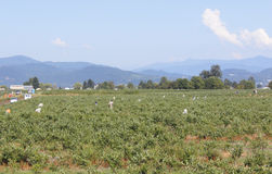 Agricoltori migratori Fotografie Stock Libere da Diritti