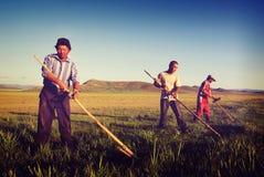 Agricoltori mongoli che lavorano concetto agricolo duro del raccolto Fotografie Stock