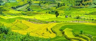 Agricoltori nei campi che raccolgono i terrazzi del riso Fotografia Stock