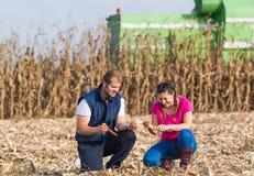 Agricoltori nei campi di grano durante il raccolto immagine stock
