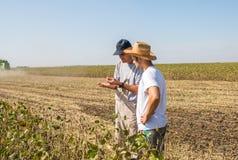 Agricoltori nei giacimenti della soia Immagine Stock