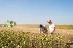 Agricoltori nei giacimenti della soia Fotografia Stock Libera da Diritti