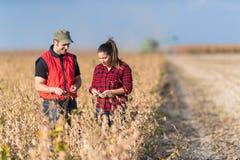 Agricoltori nei giacimenti della soia prima del raccolto Immagini Stock