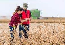 Agricoltori nei giacimenti della soia prima del raccolto Fotografia Stock