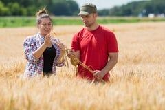 Agricoltori nei giacimenti di grano Fotografia Stock
