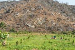 Agricoltori nel campo di agricoltura L'Angola, Fotografie Stock Libere da Diritti