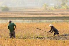 Agricoltori nel giacimento del riso Immagini Stock