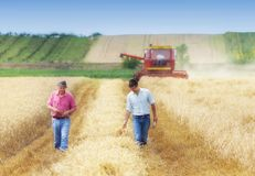 Agricoltori nel giacimento di grano durante il raccolto Fotografie Stock