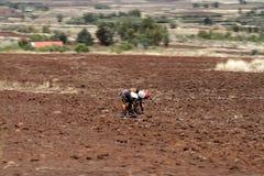 Agricoltori nel Kenya durante la semina nel campo Immagine Stock