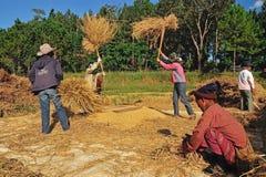 Agricoltori non identificati che isthreshing grano dopo la raccolta Fotografia Stock Libera da Diritti