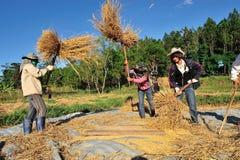 Agricoltori non identificati che isthreshing grano dopo la raccolta Immagini Stock Libere da Diritti