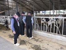 Agricoltori olandesi anziani in costume tradizionale sull'azienda lattiera in hollan Fotografie Stock Libere da Diritti