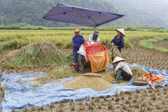 Agricoltori per il raccolto Fotografia Stock Libera da Diritti